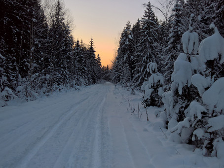 Winter has finally arrived in Naliboki Forest. Winter continues: a photo-report till spring.