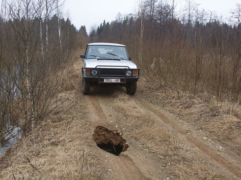 Watch out! Beavers in roads in Naliboki Forest.