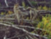 wildlife watching - wildlife holidays - wildlife tours to Naliboki Forest
