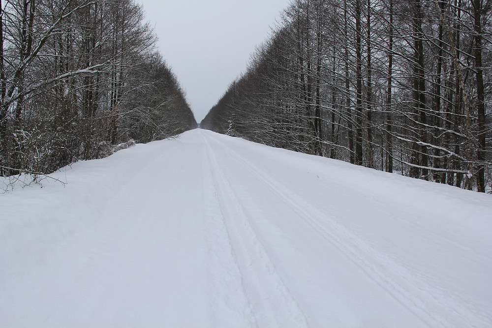 Road at Haliandernja hamlet, Naliboki Forest, 2017