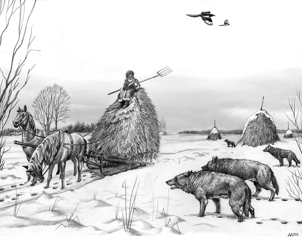 Wolf pack is going to attack horses and old man, who is transporting hay from Naliboki Forest, 18th century. Drawing by Aliaksandr Mitianin.