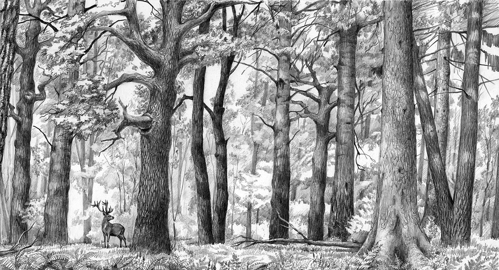 Primeval look of Naliboki Forest in the Middle Ages. Drawing by Aliaksandr Mitianin.