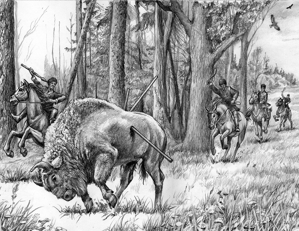 Hunting on bison horseback with cold steel, namely with heavy spears, mid 17th century. Drawing by Aliaksandr Mitianin.