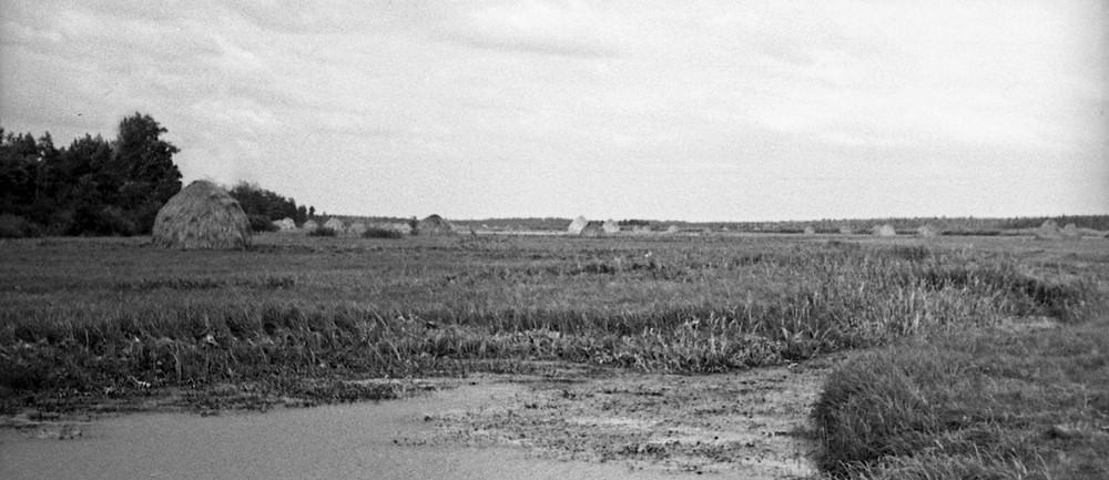 Паўднёвае Ўюнішча з рэчкаю Быстрай-Вусы пасьля сенаваньня недзе каля Баркоў (відаць паўночна-заходні кут леса Баркоў што  зьлева). Фота Івана Данілюка 1949 года з калекцыі Міколы Чэркаса.