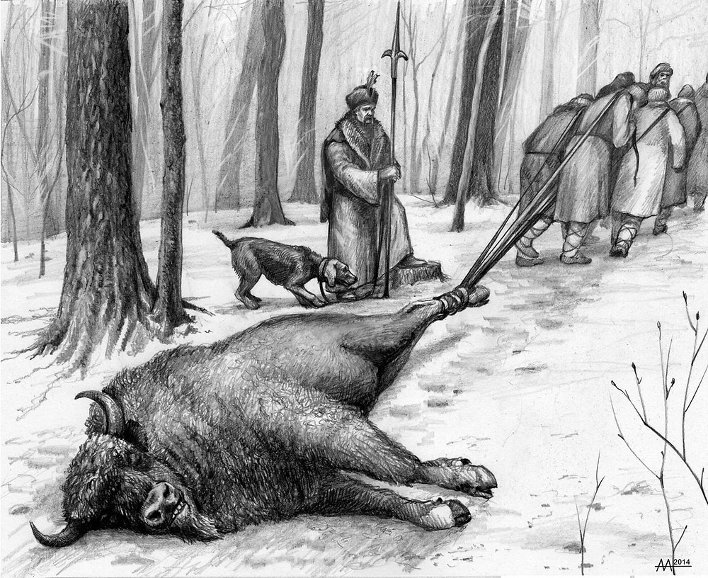 Pulling of hunted bison by peasants under the control of straliets, late 16th century. Drawing by Aliaksandr Mitianin.