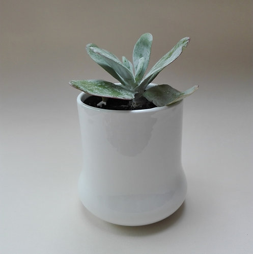 China Plant Pot. Cacti Pot. Succulent Pot. Ceramic Plant Pot. Pen Pot.