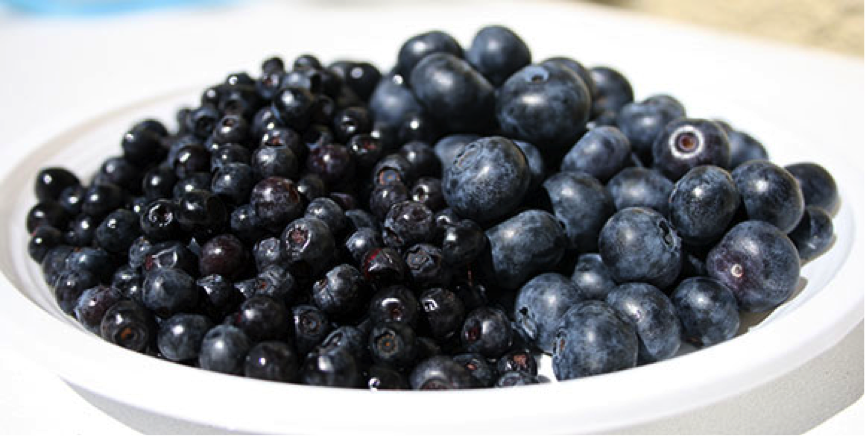 learn about food blueberry vs bilberry what s the difference