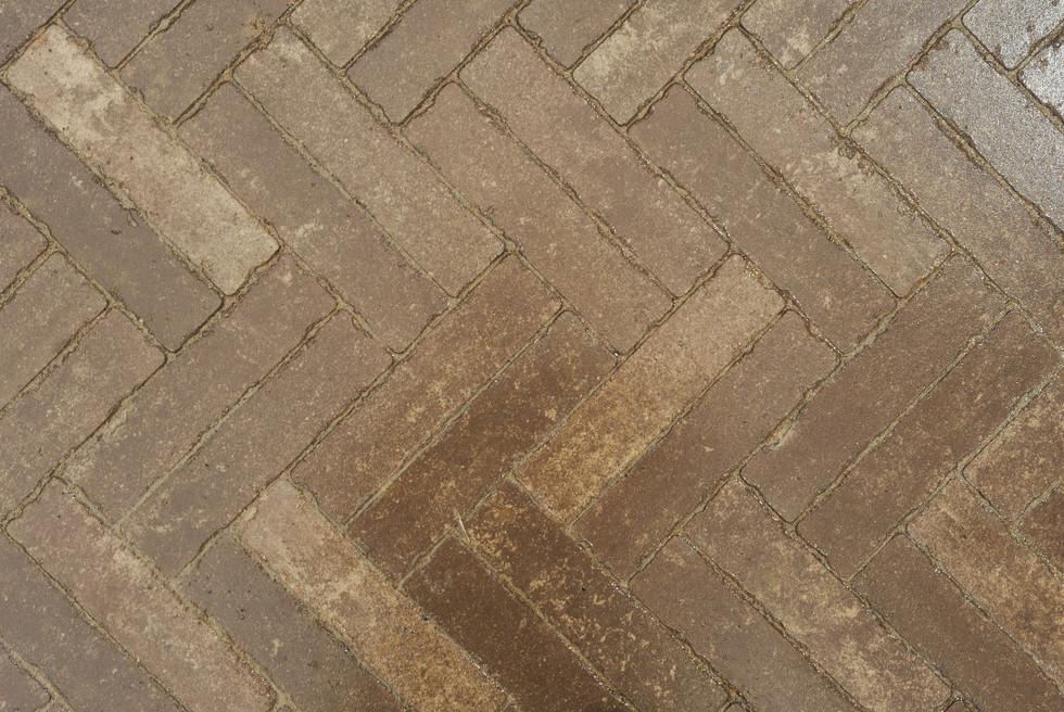 Sorensen.pathway.TIMSNYDERPHOTO2019-17.j