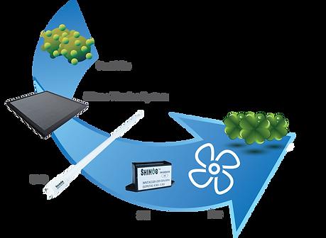 Shinoe Purification Process