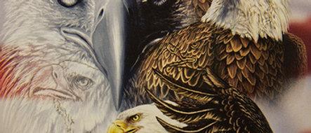 Find 10 Eagles - Gardner