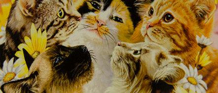 Kittens - Gardner