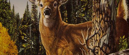 Find 9 Deer - Gardner