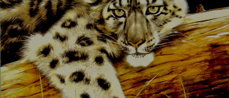 Golden Snow Cat - Merrick