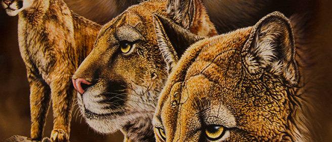Find 10 Cougars - Gardner