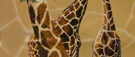 3 Giraffes - Gardner