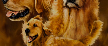 Golden Retrievers - Gardner