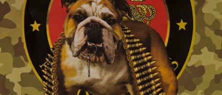 TNT Marine Bulldog