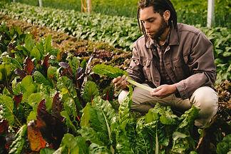 organic-GJMSN3Q.jpg