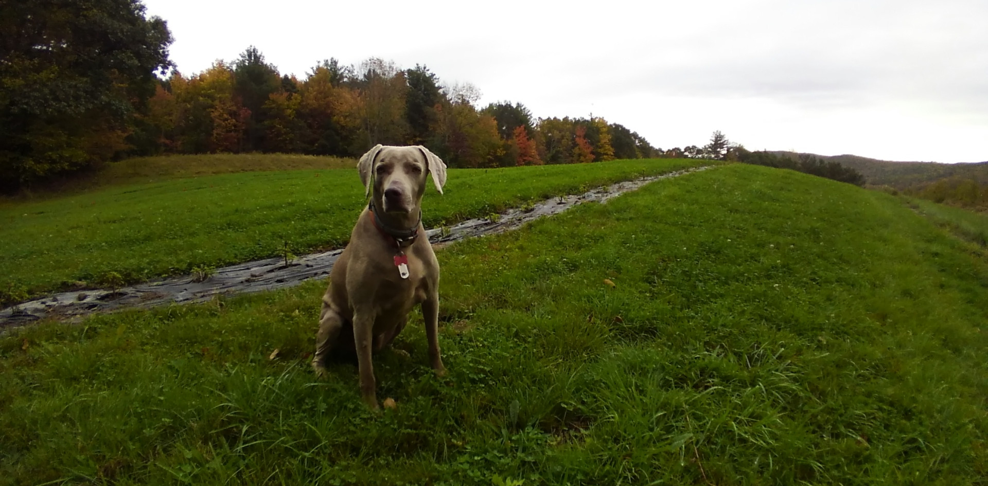 Elderberry Guard Dog.JPG