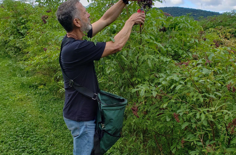 Bruce Harvesting 2020.jpeg