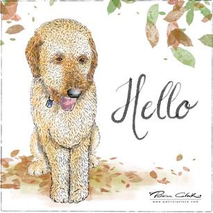 Ollie/Hello