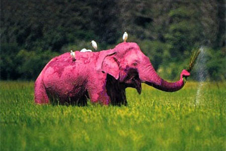 Overcoming barriers with pink elephants!