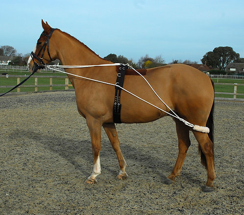 Lunging/training aid complete with roller