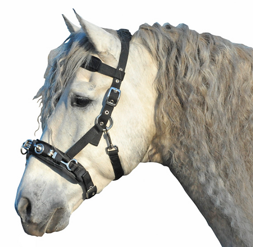 HKM Luxury padded lunging cavesson