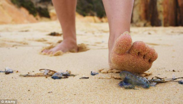 dead blue jellyfish