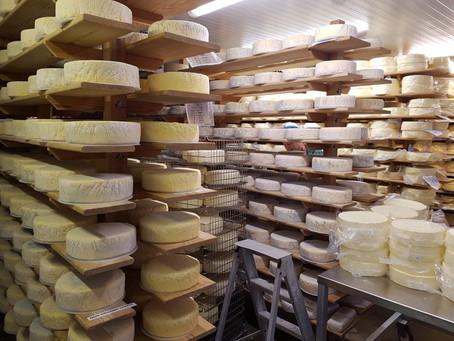 Vanaf deze week ook heerlijke Brighton Blue kaas uit Sussex in onze winkel aan de Nieuwstad in Weesp