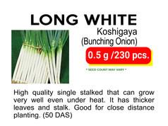 LONG WHITE.jpg