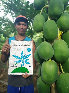 Naturamin WSP Red Lady Papaya Grower.jpg