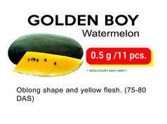 GOLDEN BOY.jpg