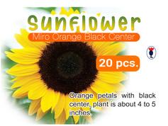 SUNFLOWER MIRO ORANGE BLACK CENTER.jpg