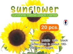 SUNFLOWER SUNSHINE YELLOW BLACK.jpg