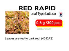RED RAPID.jpg