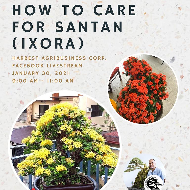 Agribiz Kapihan: Basics of Bonsai (Part 2): How to Care for Santan (Ixora)