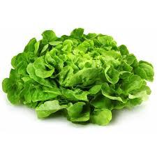 Salade Feuille de Chêne Blonde Bio vendue à la pièce