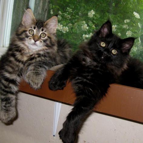 Kittens around 2010