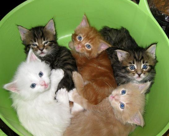 Alaska's kittens.jpg