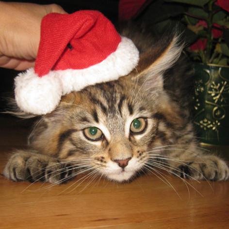 Kitten from our last litter in 2012