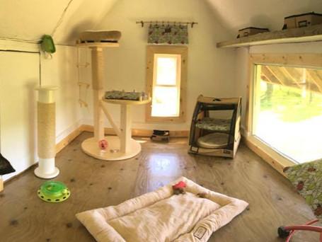 Kitten Summer Play House