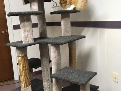 Reuben checking our brand new climbing structure