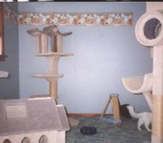 Our Cat gym in 1997