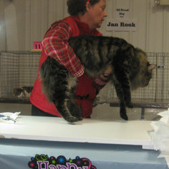 """Tigger at the show hall. The lady judge said """"Is he ok?"""" Lol"""