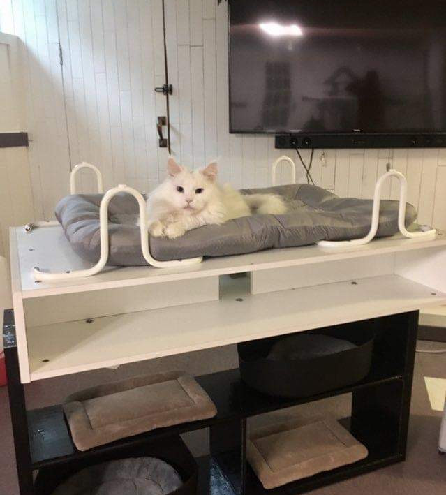 Homemade cat structure (painted shelf with screwed on upside-down table).