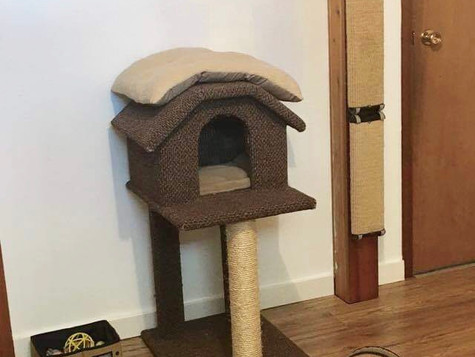Tree-like scratch post for climbing