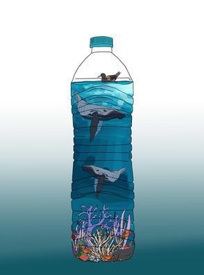 Casey Stewart 'Bottles World'
