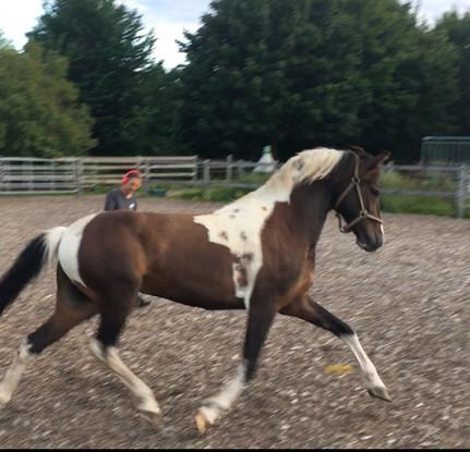 Pferd Mensch