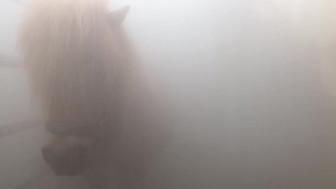 Solekammer Nebel